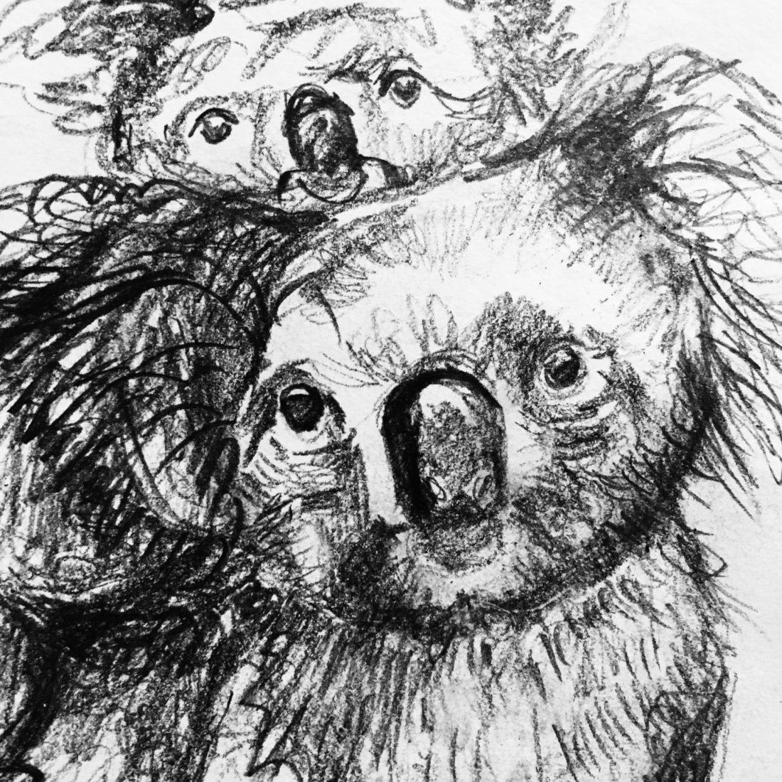Koala Babes